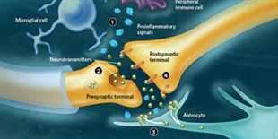 Infographic: Two Pain Paths Diverge in the Body