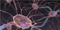 image: CRISPR Proves Promising for Treating ALS in Mice