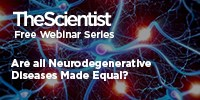 image: Are All Neurodegenerative Diseases Made Equal?