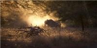 image: Image of the Day: Elephants at Sunset