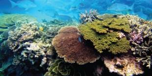 Researchers Cryopreserve Coral Sperm
