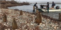 "image: Scientists Unite to Save ""Monkey Island"" After Hurricane Maria"
