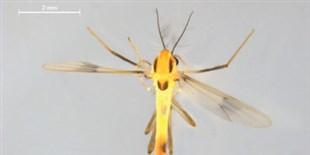 Graduate Student Identifies Dozens of New Fly Species