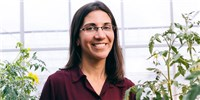 image: Anjali Iyer-Pascuzzi Investigates How Pathogens Invade Plant Roots