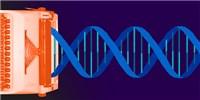 image: EPO Revokes Broad's CRISPR Patent