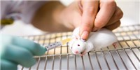 image: Locally-Injected Immunotherapy Eradicates Tumors in Mice