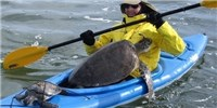 image: Image of the Day: Sea Turtle Rescue