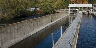 Study Finds Epigenetic Differences Between Hatchery-Raised and Wild-Born Salmon