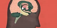 Infographic: Searching for the Neural Basis of Gender