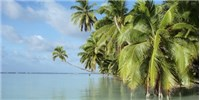 image: Paradise Regained: How the Palmyra Atoll Got Rid of Invasive Mosquitoes