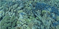 image: Image of the Day: Coral on Acid