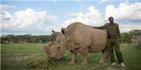 image: World's Last Male Northern White Rhino Dies