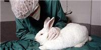 image: USDA Ordered to Publish Complete Animal Welfare Reports