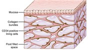 image: Is the Interstitium Really a New Organ?