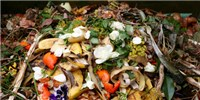image: Organic Fertilizers Rife With Microplastics: Study