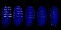 image: Image of the Day: Gene Expression