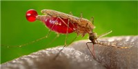 image: Children With Malaria Smell More Attractive to Mosquitoes
