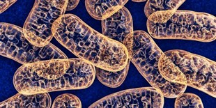 Mitochondrial DNA Plays a Role in Metastasis