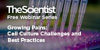 image: Growing Pains: Cell Culture Challenges and Best Practices