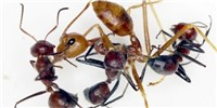 image: Image of the Day: Ant Attack!