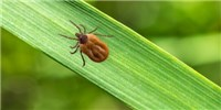 image: Diseases From Ticks and Mosquitoes Have Tripled