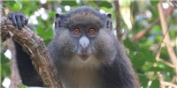 image: Monkey Hybrids Challenge Assumptions of What a Species Is
