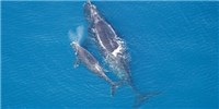 image: Proposed Seismic Surveys Raise Concern Over Health of Marine Life
