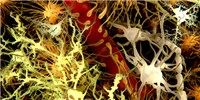 image: Microbes Affect Brain Cells' Activities in Mice with Multiple Sclerosis