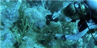 image: Image of the Day: Coral Firebreak