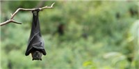 image: Nipah Virus Kills 10 in India