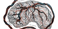 image: Placental Health Influences Baby's Future Schizophrenia Risk, Study Suggests