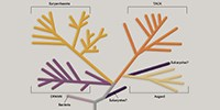 image: Infographic: Can Archaea Teach Us About the Evolution of Eukaroyotes?