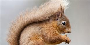 Many Species of British Mammals at Risk of Extinction