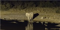 image: Humans are Making Mammals Return to the Night Life