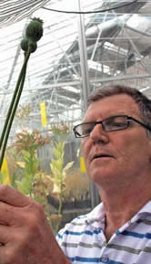 <figcaption>Philip Larkin examines the last of his transgenic poppies growing in a greenhouse at the Black Mountain Laboratory in Canberra, Australia. Credit: Courtesy of Brendan Borrell</figcaption>
