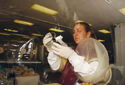<figcaption>A Taconic animal care technician inspects a genetically engineered             mouse model in a gnotobiotic isolator at the Germantown, NY             facility. Credit: Courtesy of Taconic</figcaption>