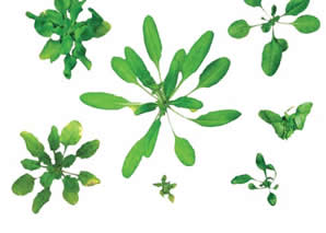 <figcaption>A normal