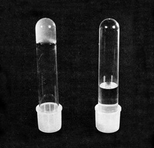 <figcaption>Inverted tubes of gelled macrophage supernate (left) and water (right)                     for comparison. Credit: &#169;  Stossel, T.P., and J.H. Hartwig originally published in J Cell Biol                      68:602-619, 1976.</figcaption>