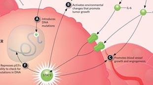 Infographic: Where Cancer and Inflammation Intersect     View full size JPG | PDF