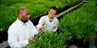Justin Pita, a senior research associate from the Ivory Coast (left), and Xin Ding, a research scientist from China, evaluate tall fescue plants in a greenhouse at The Samuel Roberts Noble Foundation, which ranked 7th among US institutions this year.Broderick Stearns