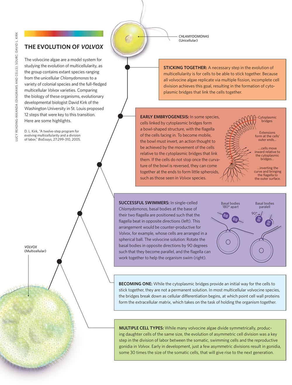 wisdom its nature origins and development pdf