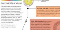 image: The Evolution of Volvox
