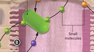 Infographic: Intestinal molecular signaling View full size JPG | PDF