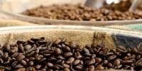 image: Bacteria live on caffeine