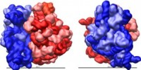 image: Top 7 in molecular biology