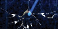 image: Optogenetics: A Light Switch for Neurons