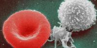 image: Stem Cells Hit Reverse