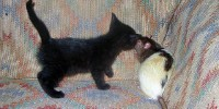 image: Parasite Spurs Rat Sexual Frenzy