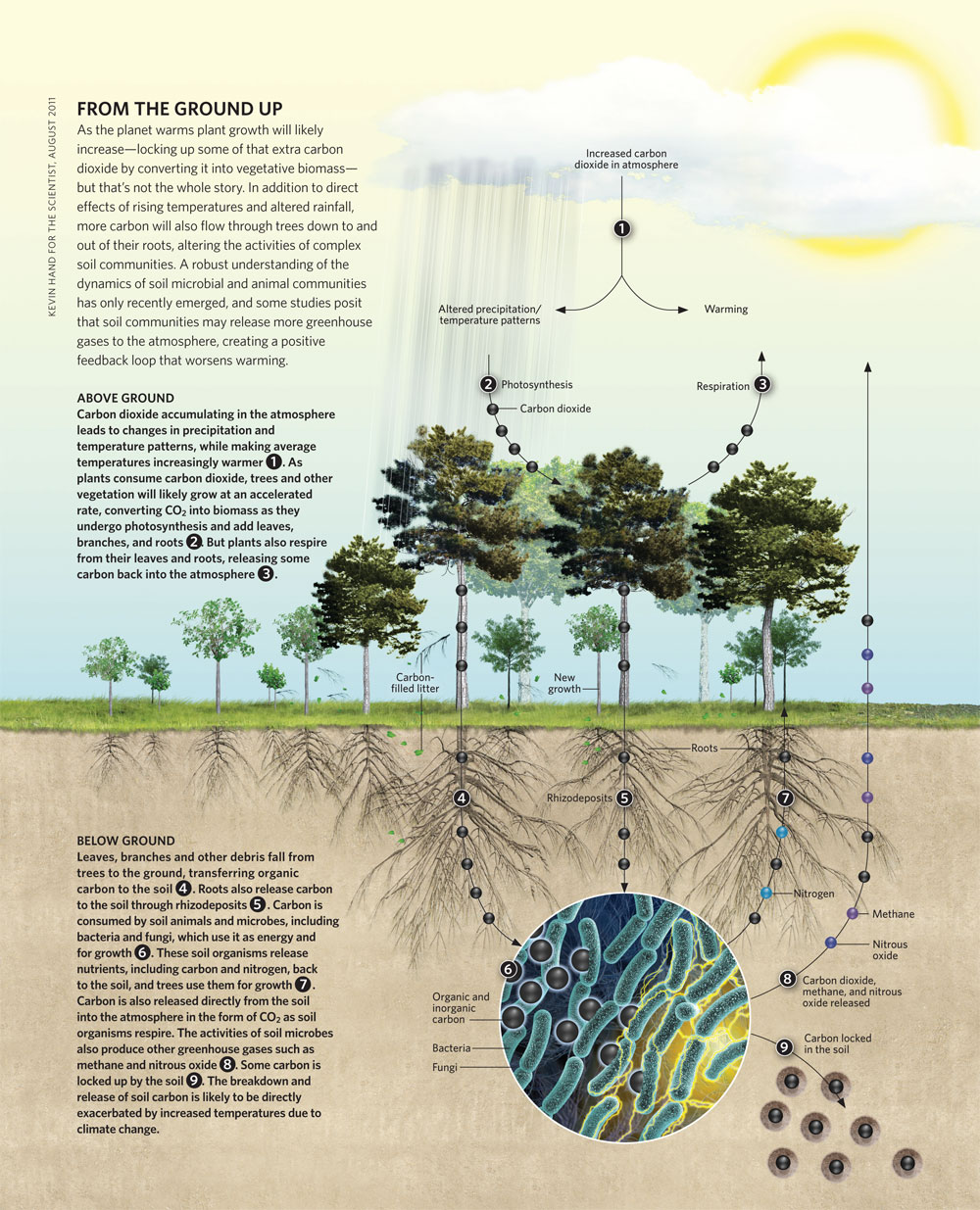 How To Think Visually Using Visual Analogies - Infographic ...