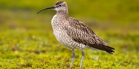 image: Bird Braves Irene